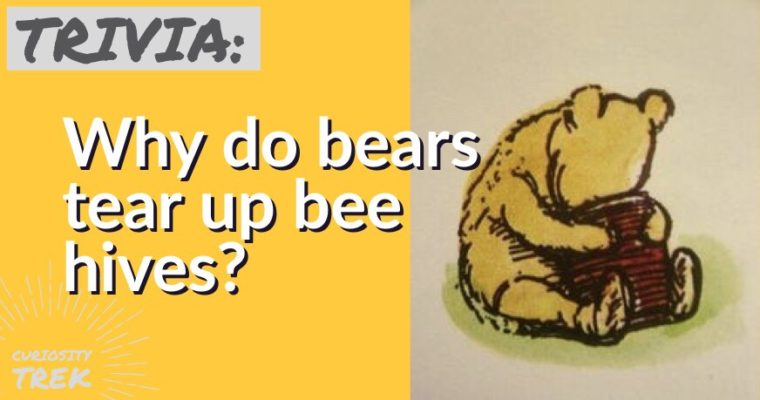 Why do bears tear up bee hives?