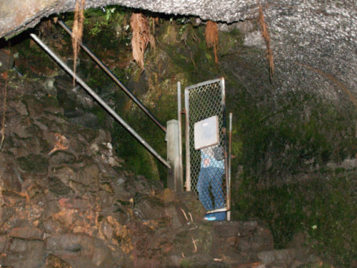 Stairs from Thurston Lava Tube - Curiosity Trek - Hawaii