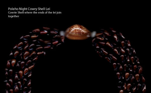 Poleho Night Cowry Shell Lei with Cowrie Shell were the ends of the lei join together - Niihau Shell Jewelry – Hawaii – Curiosity Trek