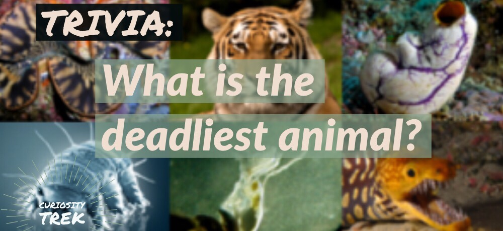 What is the deadliest animal?